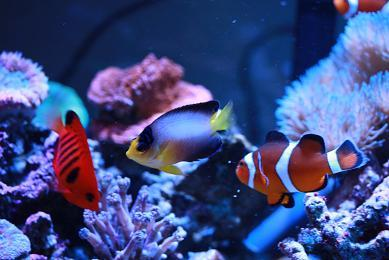 H23.1.13海水魚 010-1.JPG