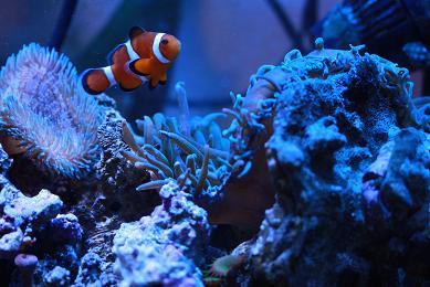 H23.1.7海水魚 010-1.JPG