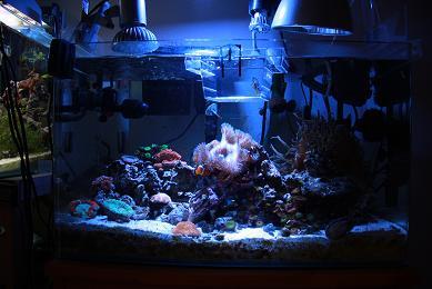 H22.12.14海水魚 016-1.JPG