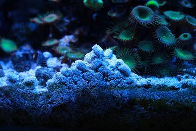 H23.1.28海水魚 018-1.JPG